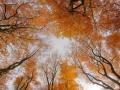 20121115Boom42-klein