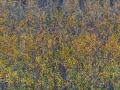 Beuningen-20091126-1-klein