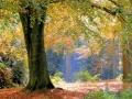 pierre-herfst1