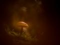 rj paddenstoel-2341