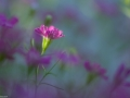 bloem-1958-klein - Copy
