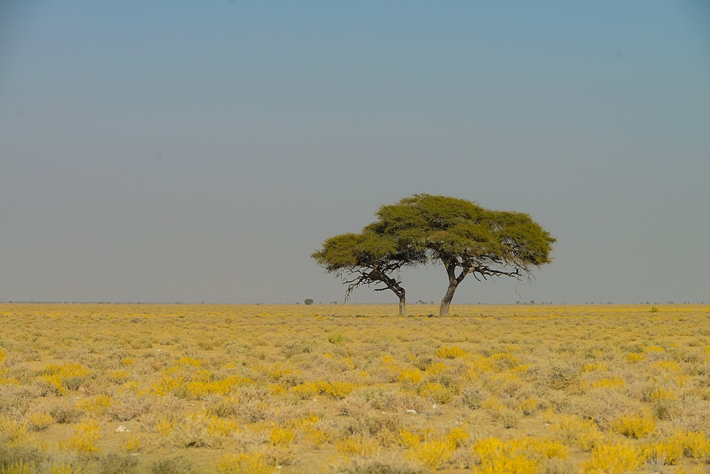 Adri_0626-095606-Namibia-
