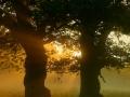 esp_2322_erikspaan_bomen