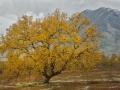 esp_4004-erikspaan-bomen-noorwegen
