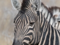 Adri-0619-101506-namibia