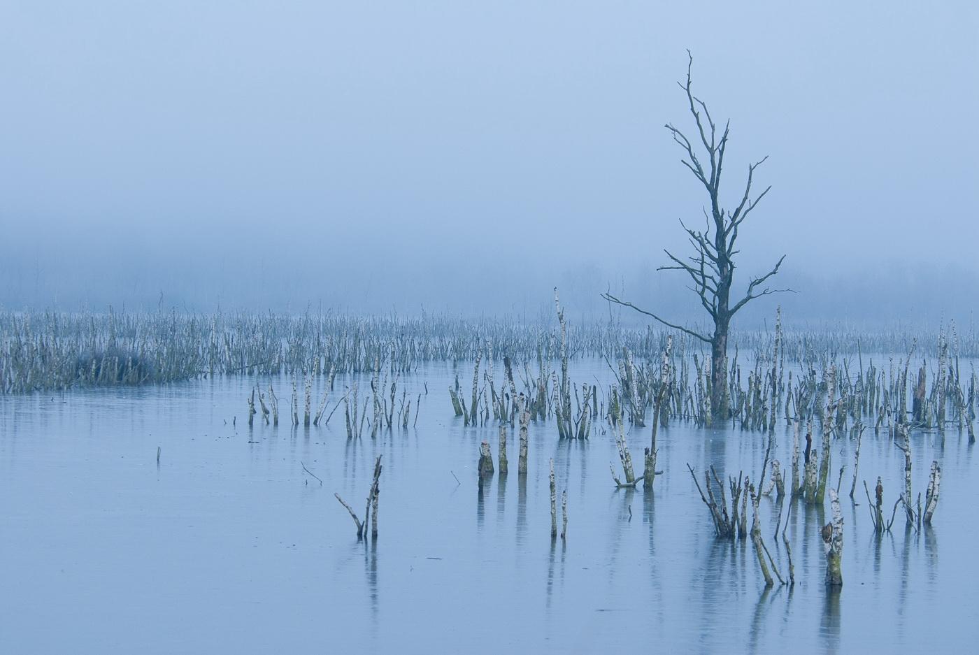Afgestorven bomen; Dead trees