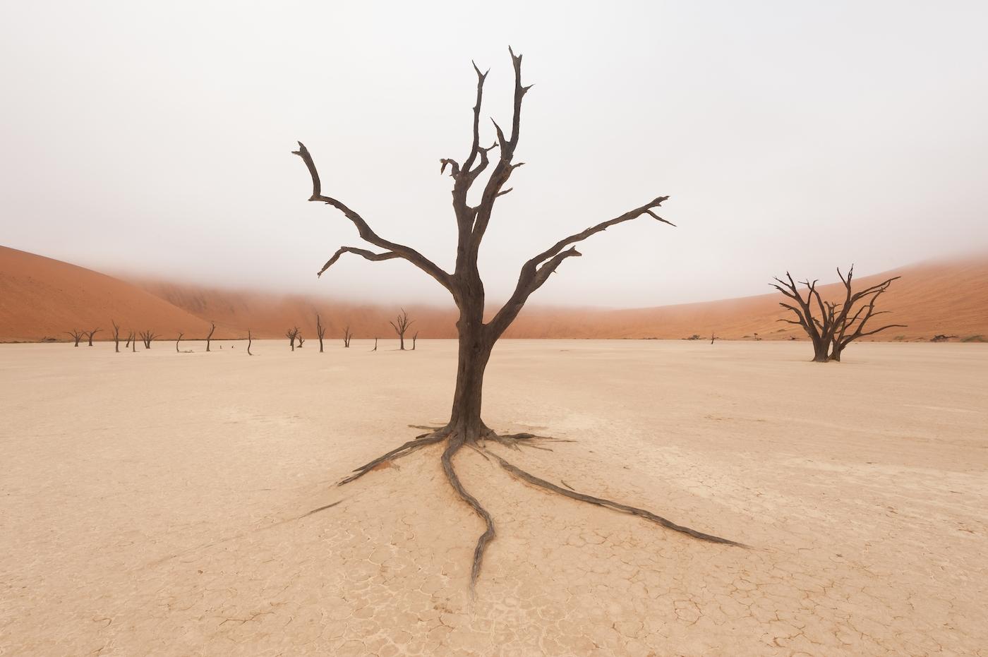 HV 20120623 76802 dood hout