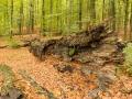 Dood hout; dead wood