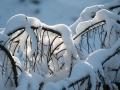 Peter Nieuwenhuis Sneeuw op de Hoge Venen 2018 (1)