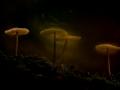 Rinie_paddenstoel-2386
