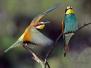 Expositie Vogels