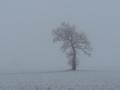 pierre-winter2