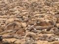 guidovdwater_zeeleeuwen_namibie