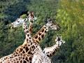 pw-giraf
