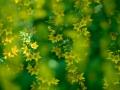 erik_bloemenpracht-1