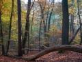 cox-5-herfstsfeer-duivelsberg