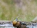 dsc_3663-badende-appelvink