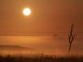 Erik Spaan - Ermelose Heide ochtend