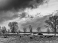 grave-maasdijk-koeien-onder-wolkenlucht-2