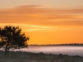 Masja Prinsen - herten op een mistige ochtend
