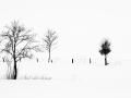rinjo-winterberg-3902