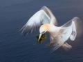 vogels026