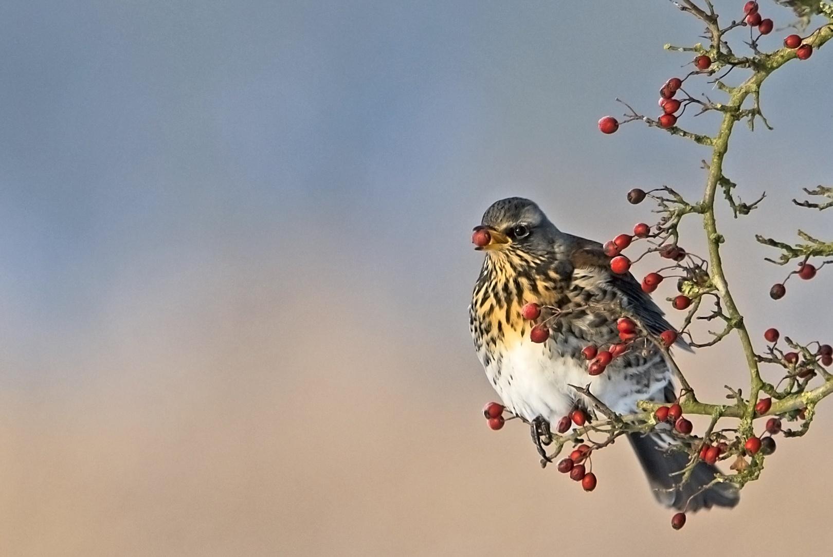 vogels018