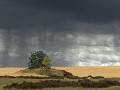 landschap022