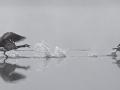 vogels030
