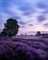 landschap016