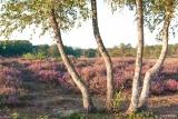 landschap024