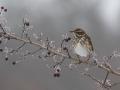 vogels-3-022