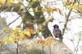 vogels012