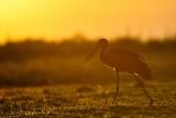 vogels013