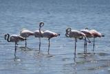 vogels015