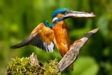 vogels017