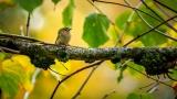 vogels019