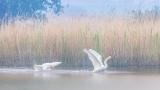 vogels021