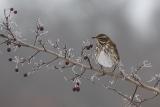 vogels022