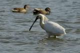 vogels023