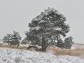 winters Mookerheide 1