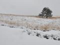winters Mookerheide 2