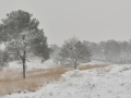 winters Mookerheide 3