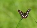 PW .. .vlinder_1280x853