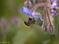 bee-world