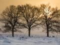 pieter-buma-hertjes-in-de-sneeuw-delen