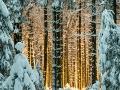 pieter-buma-zonsopkomst-door-bos-hoge-venen