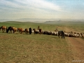 mongolie-42-1