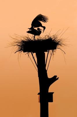 04 parend op nest met antieke paal_preview_Pauline