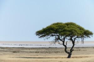 Adri Klaassen Namibië